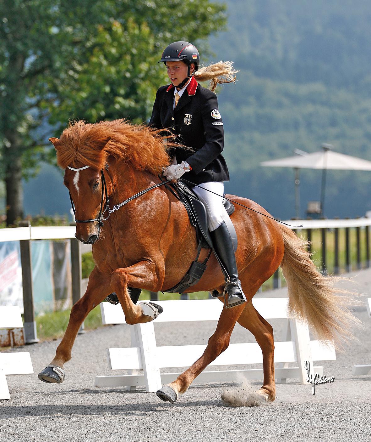 Tígull vom Kronshof, Weltmeister Viergang 2013