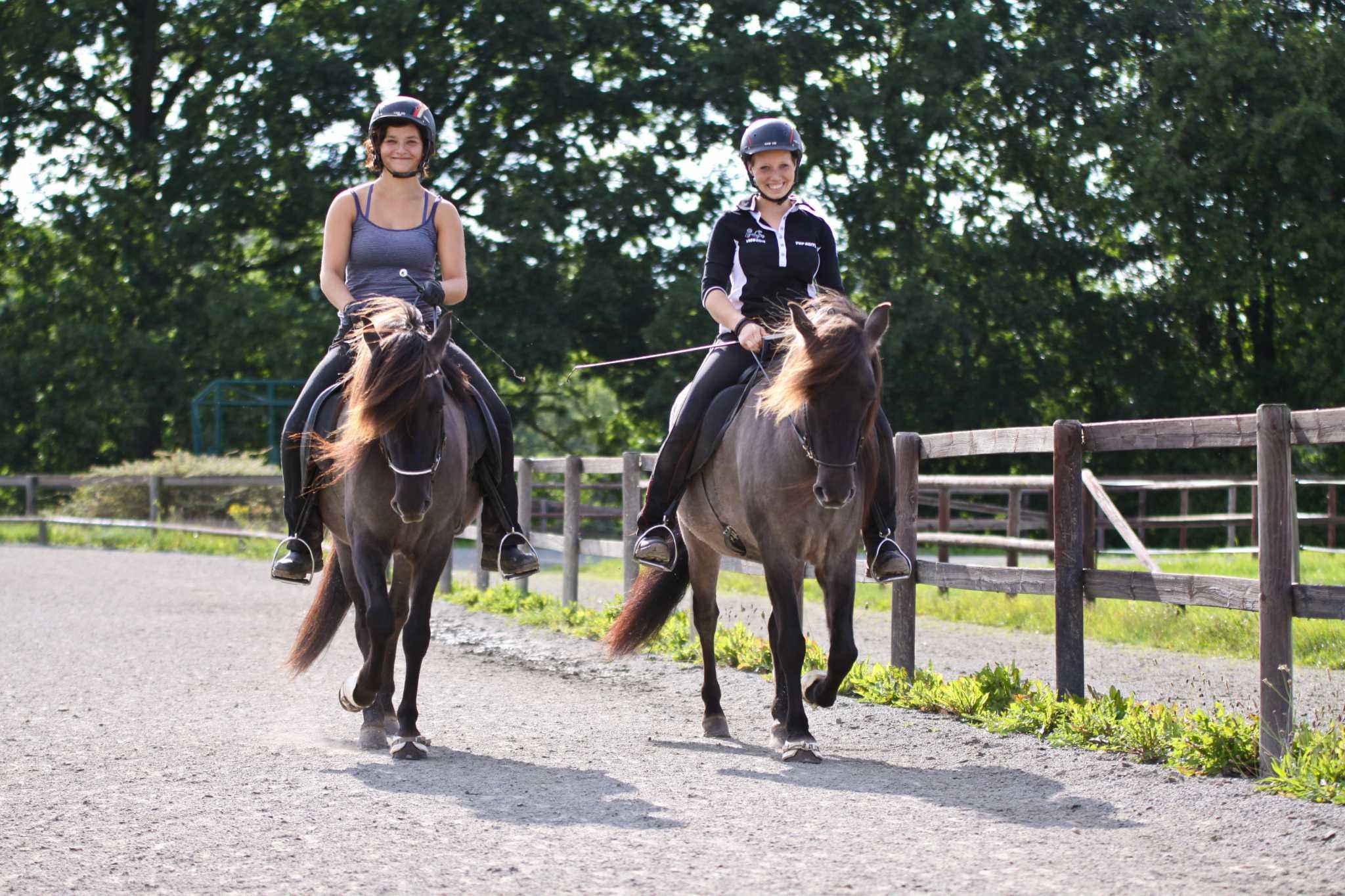 Training der Verkaufspferde