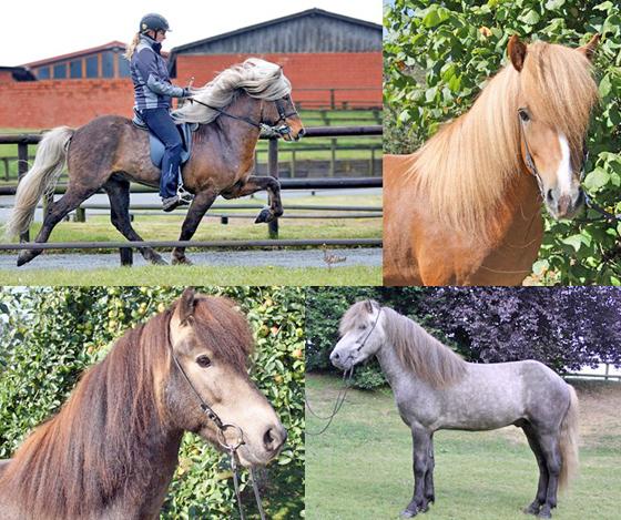 Viele neue Verkaufspferde online