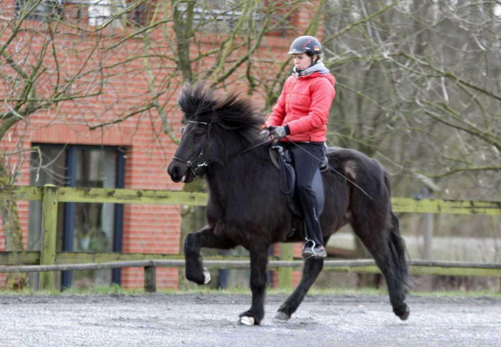 Verkaufspferd Höttur vom Kronshof