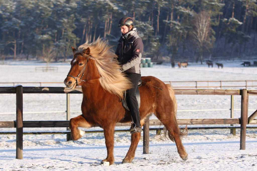 Verkaufspferd Hnísa vom Kronshof