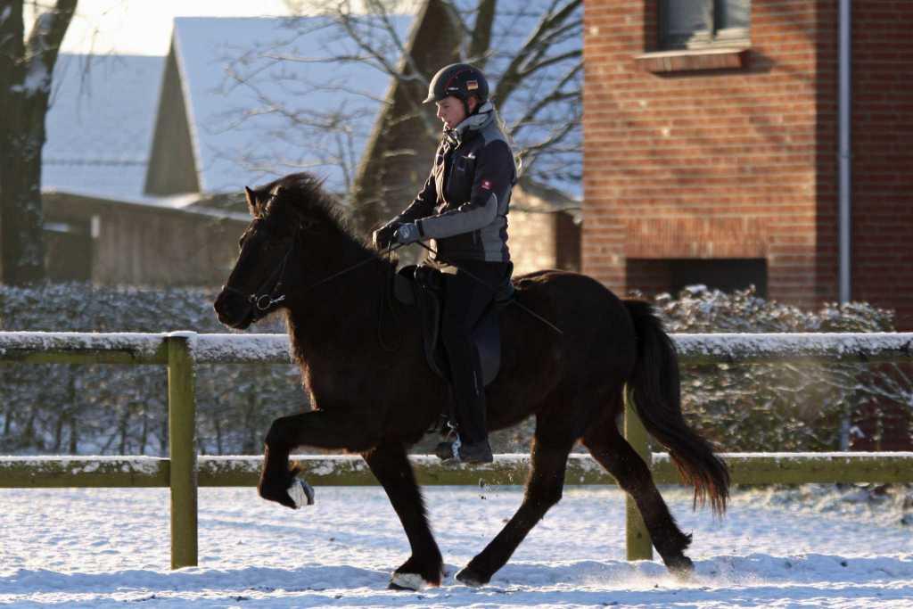 Verkaufspferd Lilja vom Kronshof