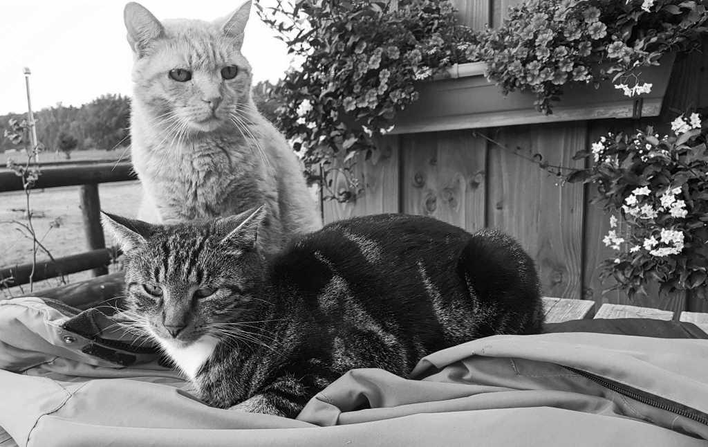 Ruht in Frieden, Jupp & Garfield!