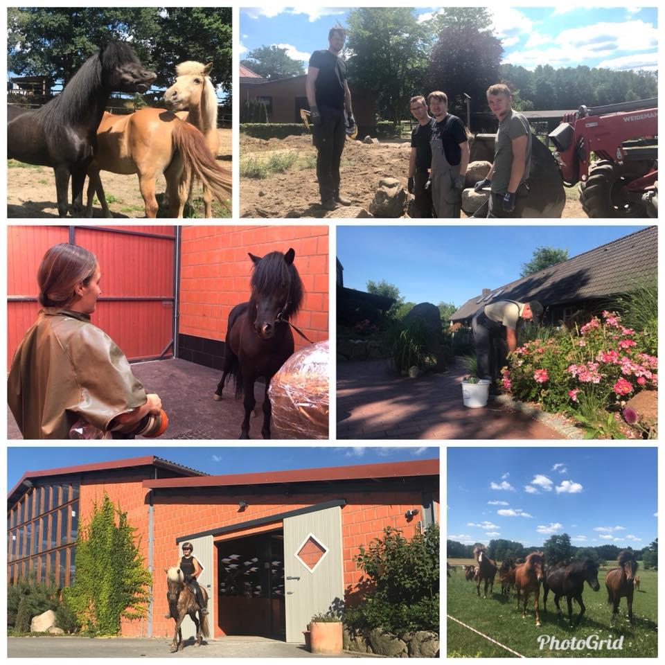 Sommerzeit auf dem Kronshof