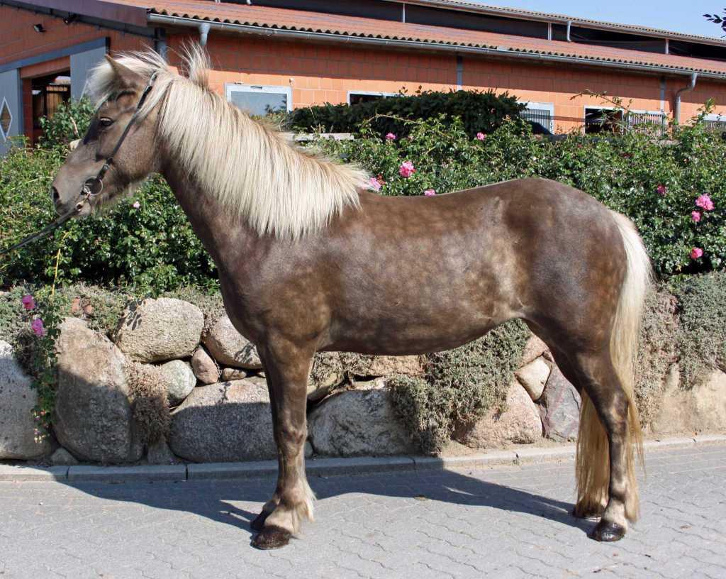 Verkaufspferd Vinda von Welkensiek