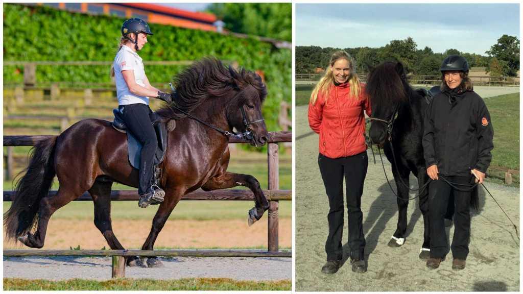 Ein ganz besonders Pferd verlässt uns heute – Leiknir wir wünsche Dir alles Gute in der neuen Heimat!