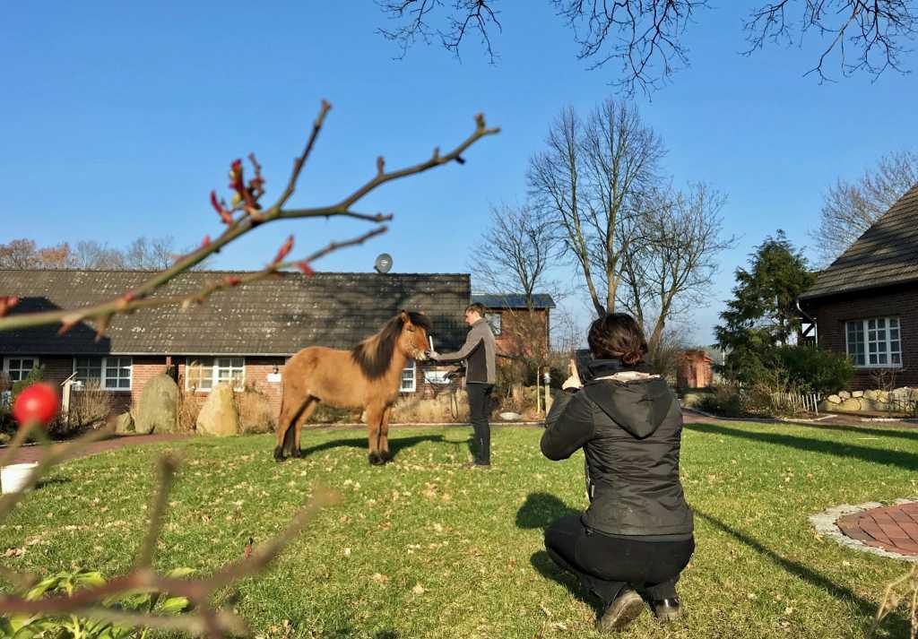 Coming soon: neue Verkaufspferde!