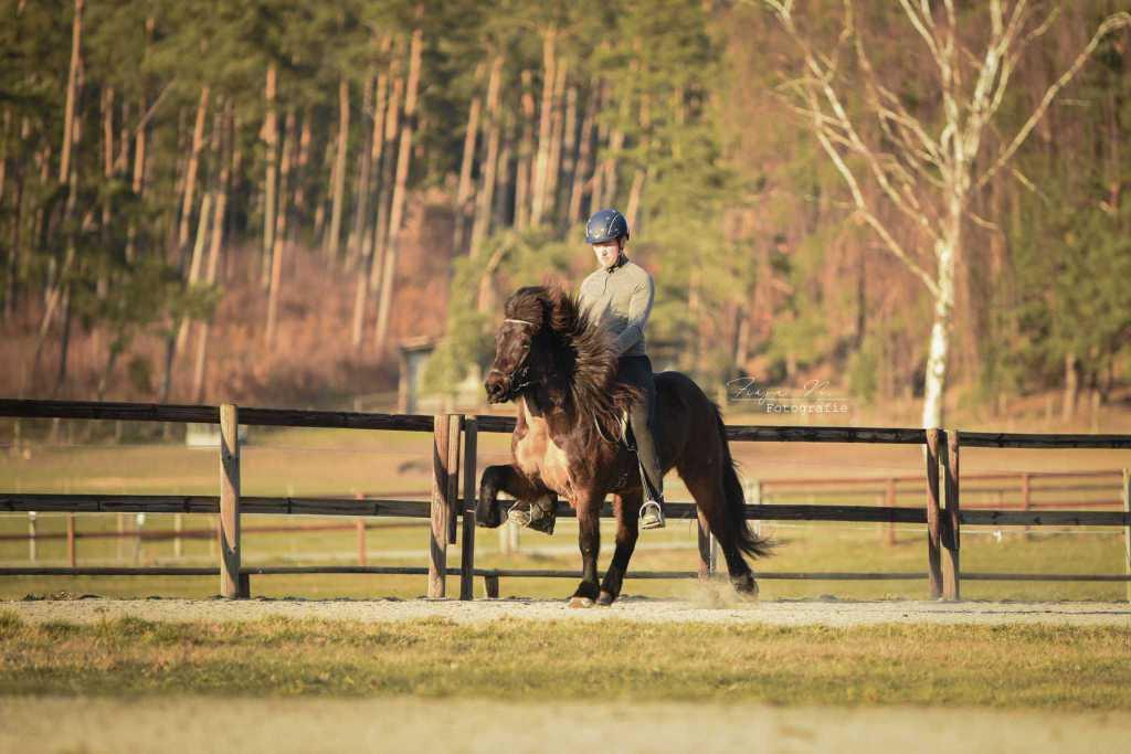 Impressionen unserer Trainingspferde