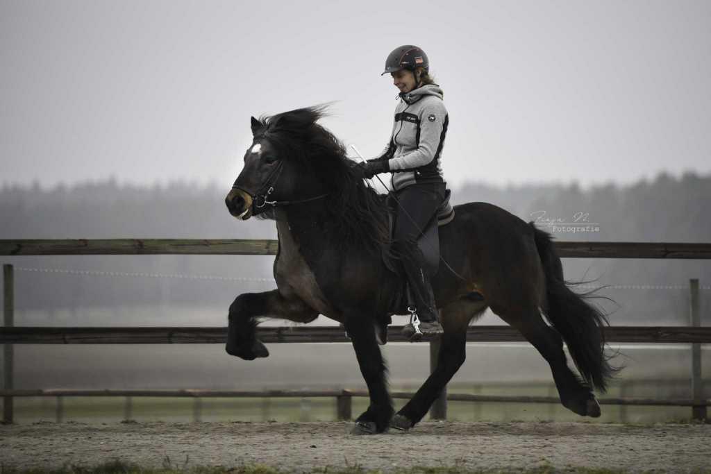 Impressionen Trainingspferde Teil 2