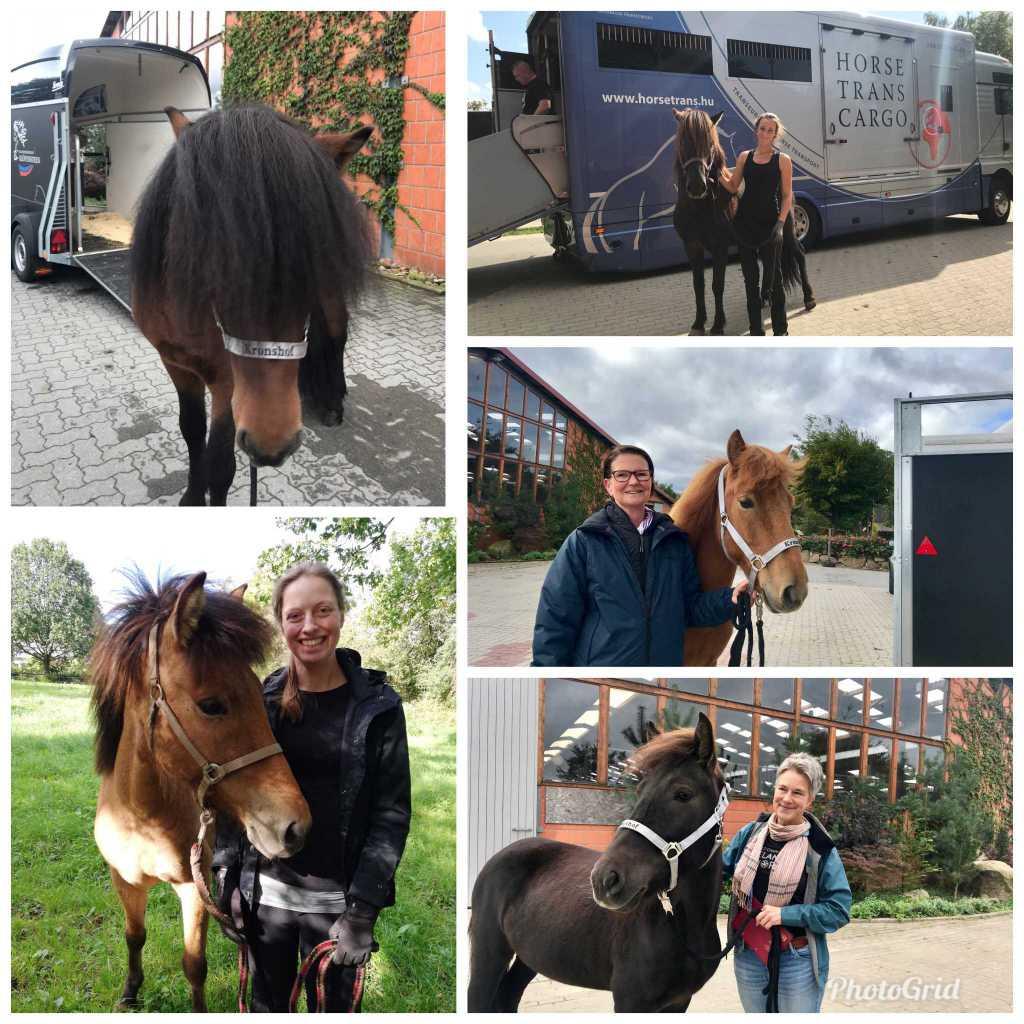 Pferde auf dem Weg zu ihren neuen Besitzern