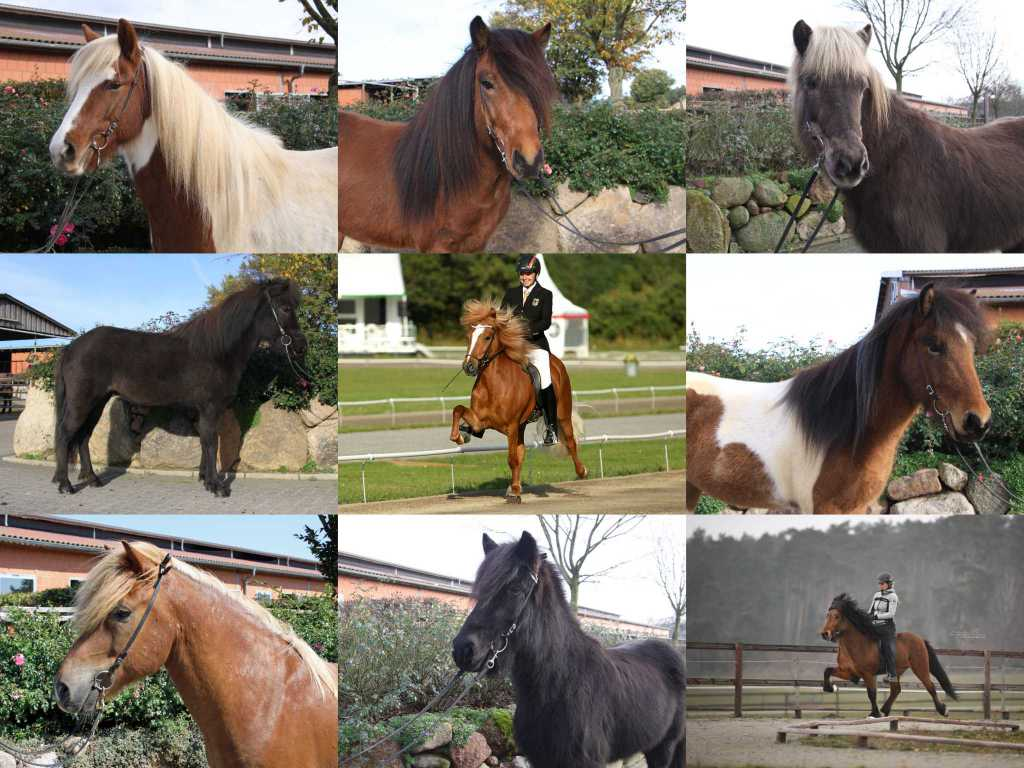 Neue Verkaufspferde online…