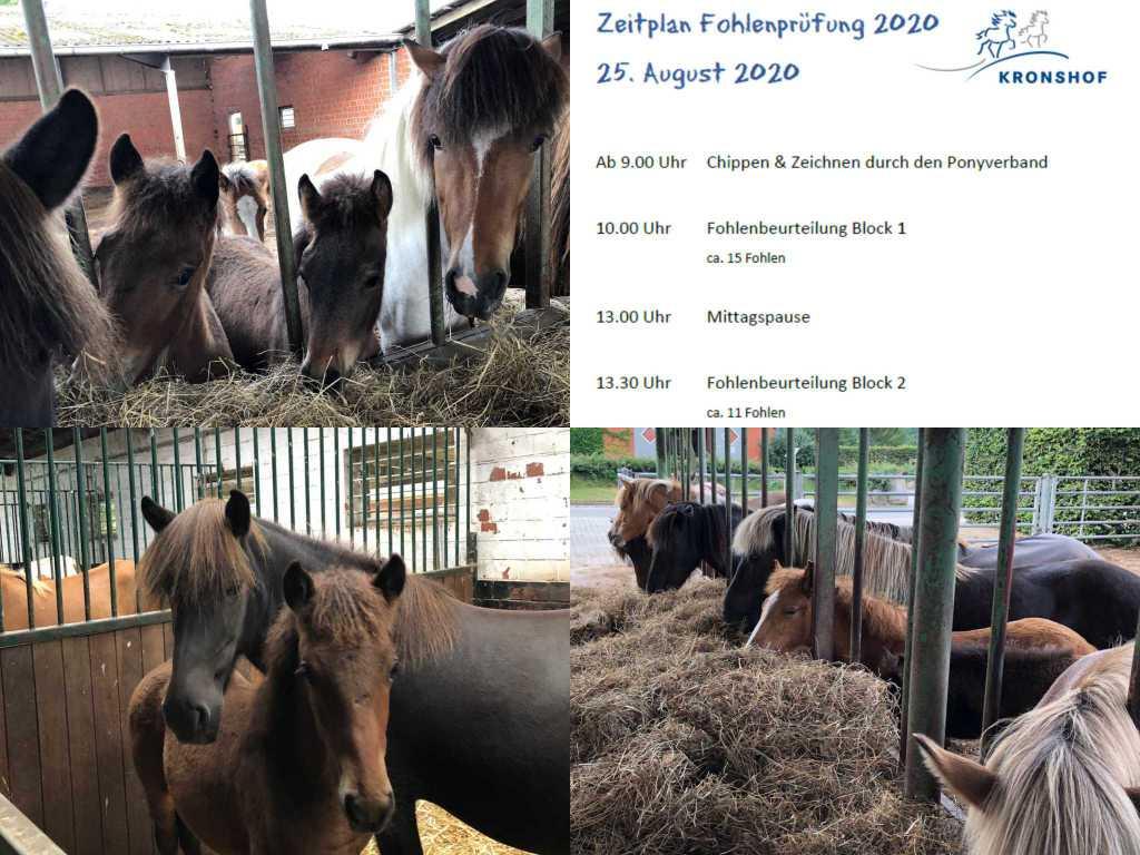 Fohlenmaterialprüfung am 25.08.2020 auf dem Kronshof