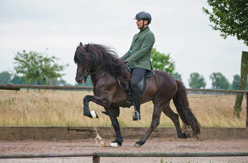 Erfolgreiche Pferde vom Kronshof