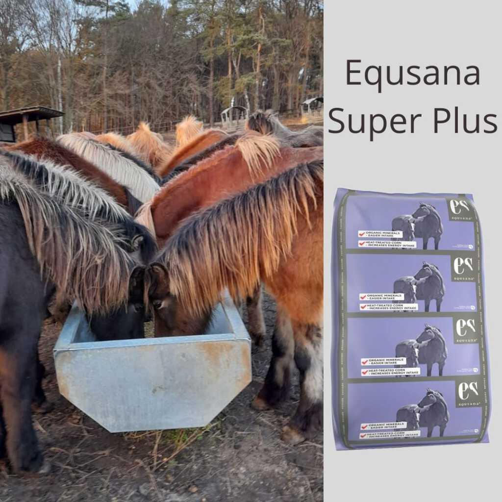 Equsana Super Plus – für unsere Zuchtpferde nur das Beste!