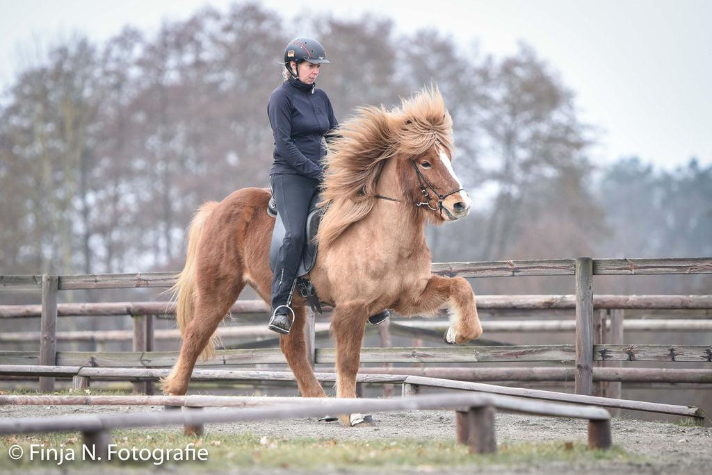Verkaufspferd Kraftur vom Kronshof II