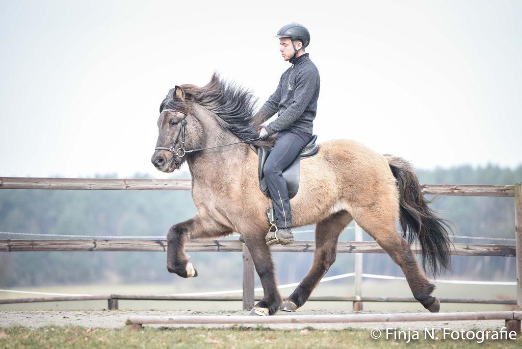 Verkaufspferd Fláki von Rinkscheid