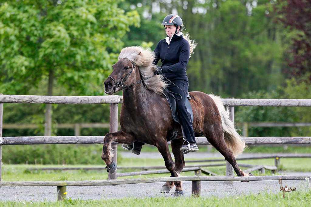 Verkaufspferd Hylling vom Kronshof