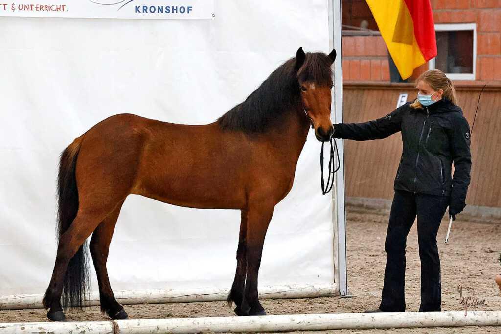 Verkaufspferd Nökkvadís vom Kronshof
