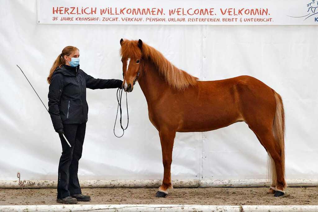 Verkaufspferd Nös vom Kronshof
