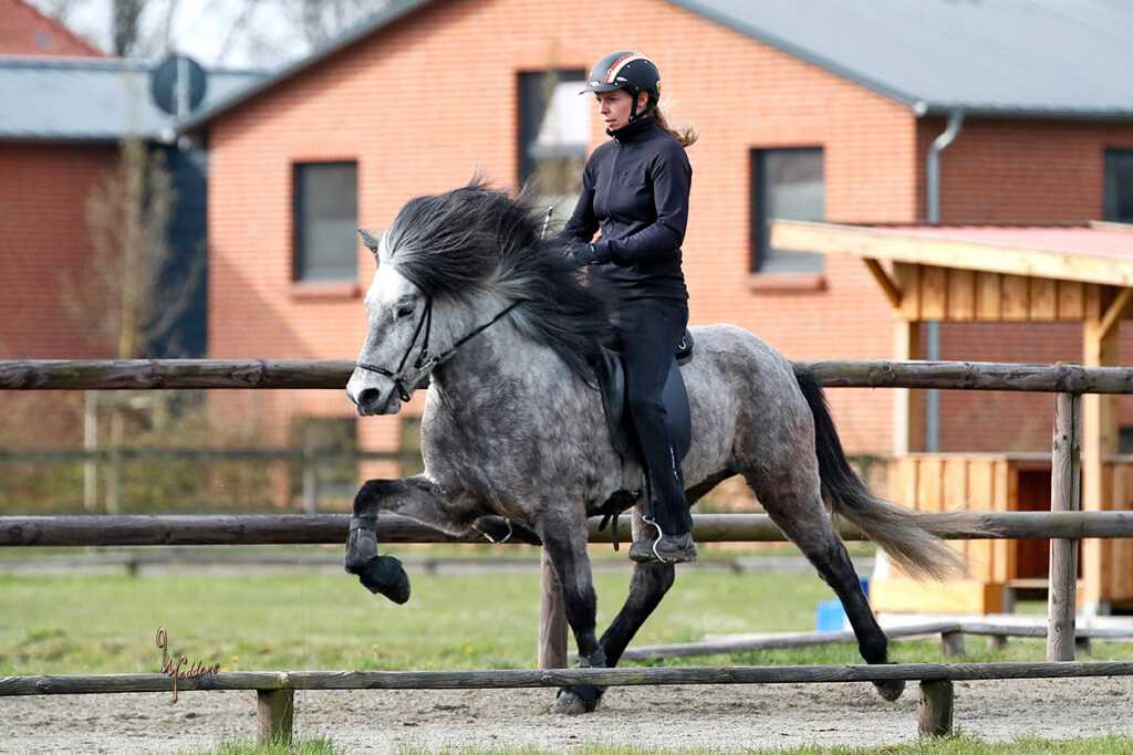 Verkaufspferd Ösp vom Kronshof