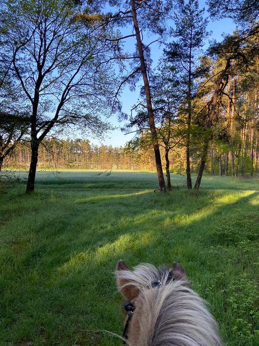 Sommerurlaub mit Pferd