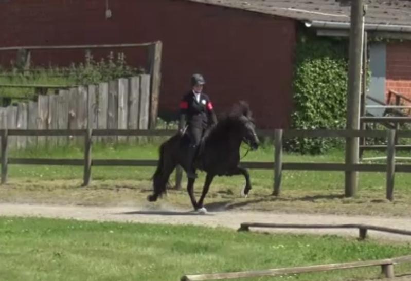 Verkaufspferd Míla vom Kronshof